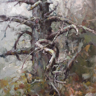 """Coastal Tree"" oil on canvas. 24x18in. available"